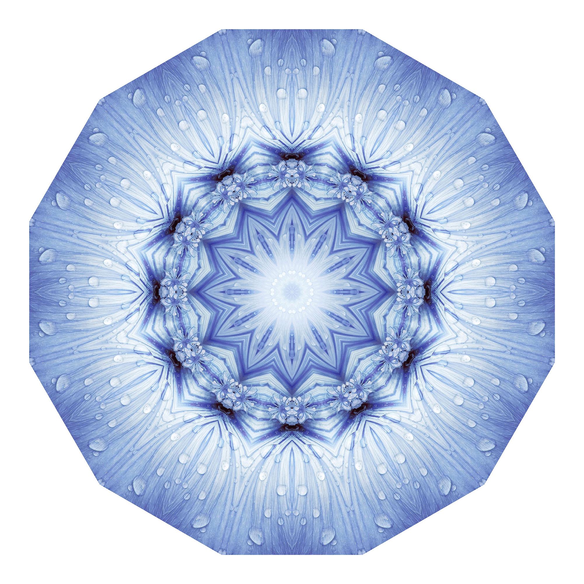 Blaue Lavatera 01