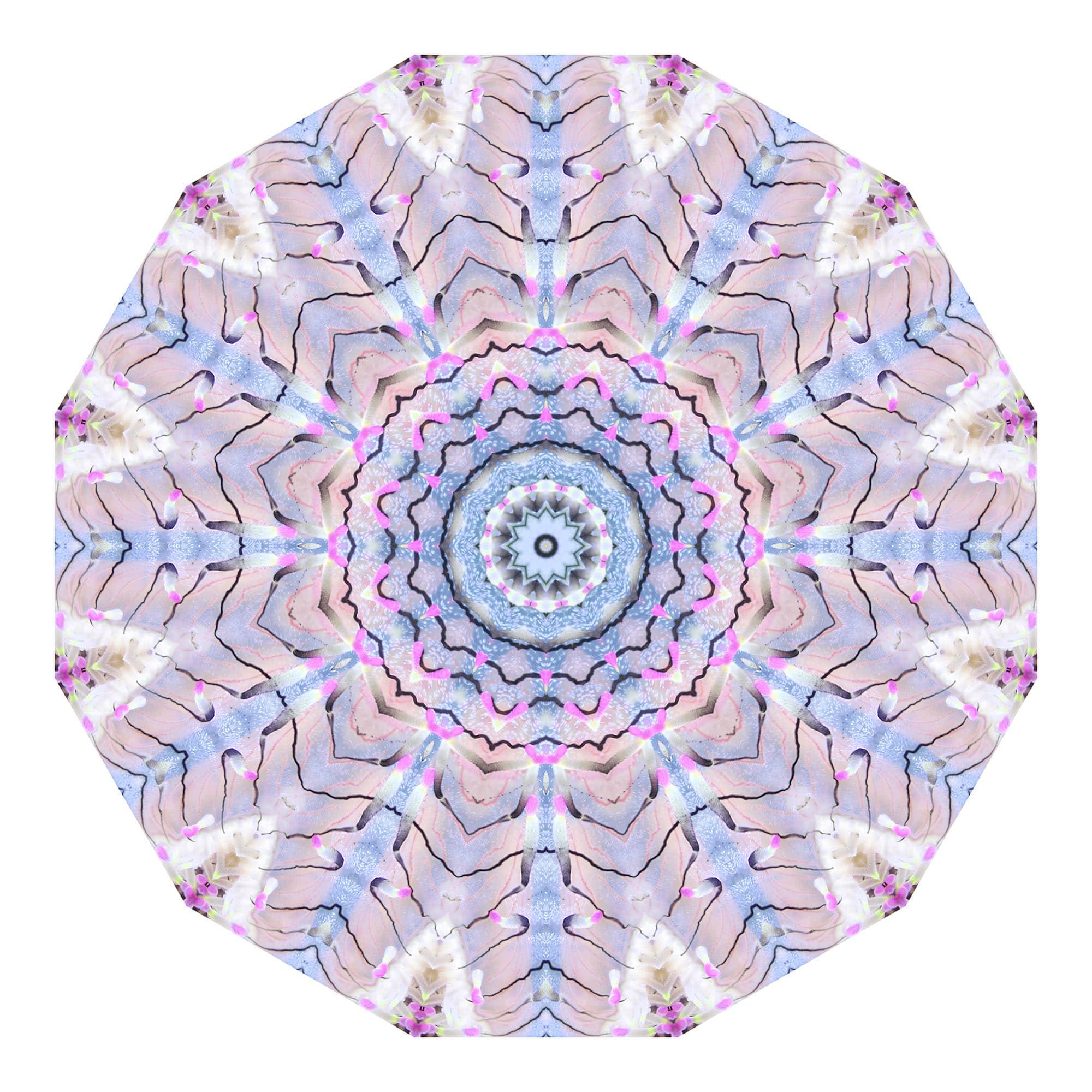 Jellyfish 01