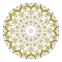 Viburnum plicatum 01